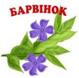 ГРУППА БАРВИНОК