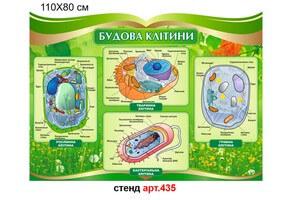 """Стенд """"Строение клетки"""" №435"""