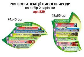 Рівні організації живої природи №829